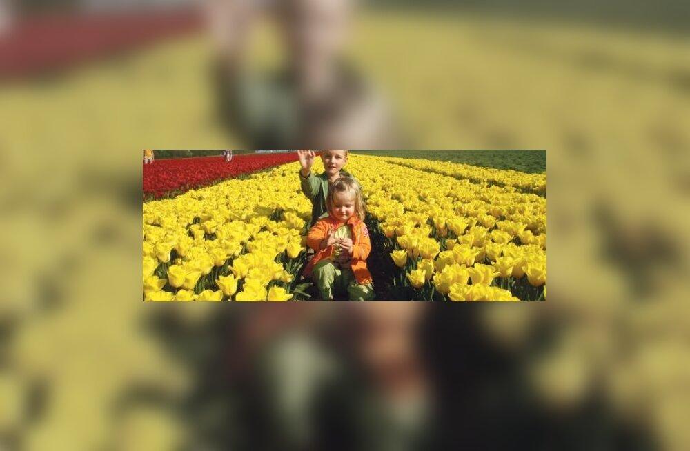 Hollandis töötab pea igas taluperes tuulik