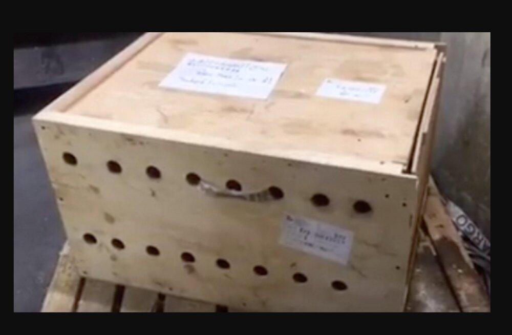 Šokeeriv leid: tundmatu kast seisis lennujaamas 7 päeva enne, kui see avati