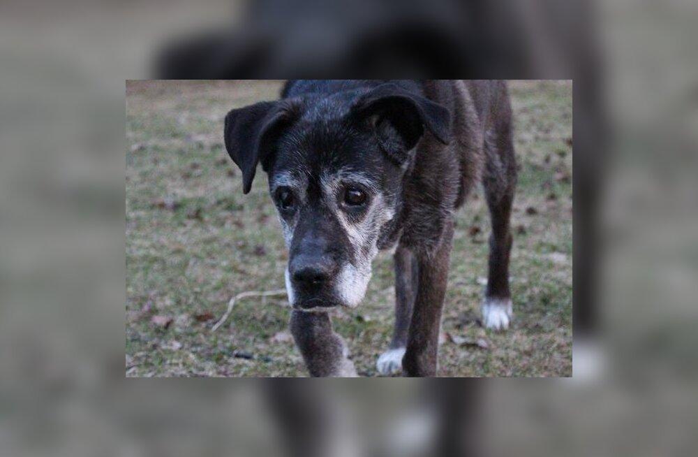 ПОМОГИТЕ | В Туулемяэ пропала слепая пожилая собака, нашедшему — вознаграждение