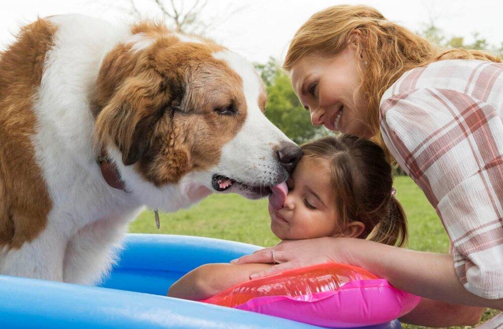 """Koguperefilmi """"Koera teekond"""" ainetel: 10 parimat filmi koertest"""