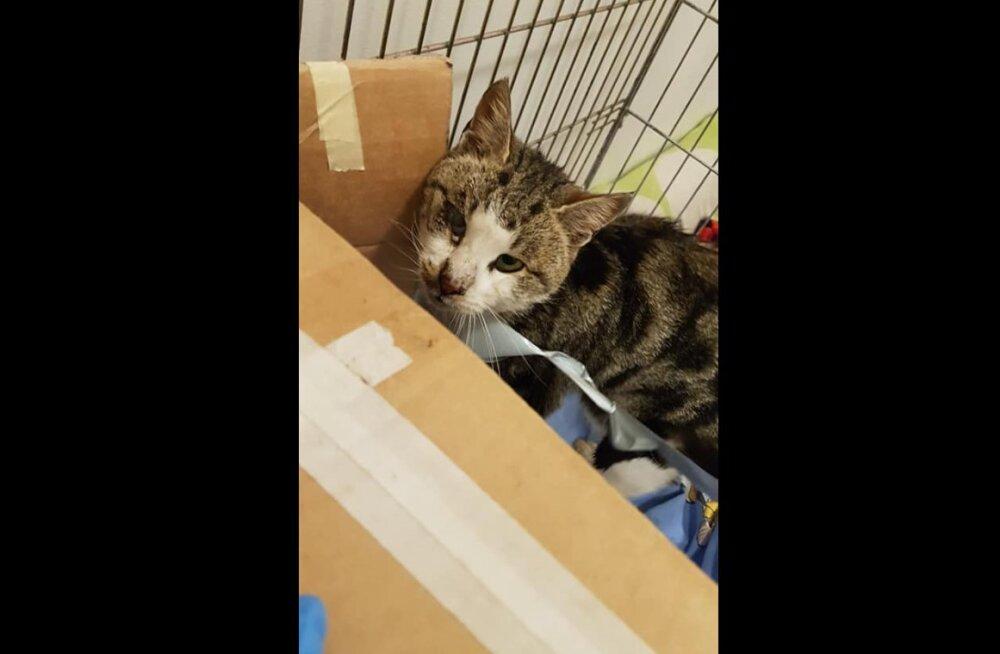 FOTOD   Koerust leiti raskes seisundis kass