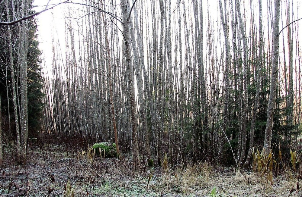 Leili metsalood | Muutuvad ja muutumatud asjad