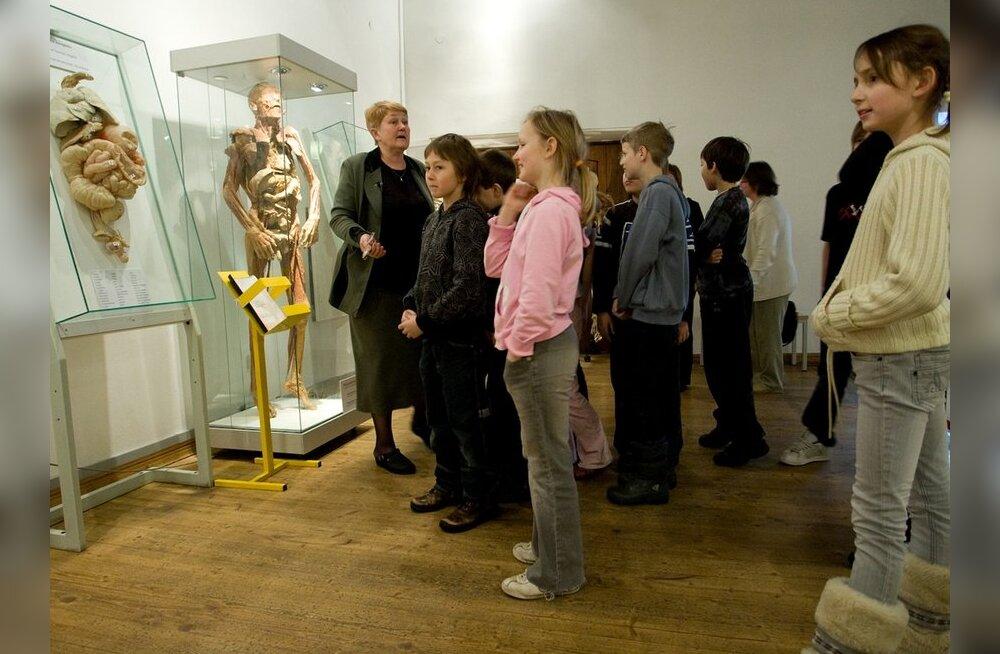 Kultuuriministeerium: muuseumide infosüsteemis on infot enam kui 1,5 miljoni museaali kohta