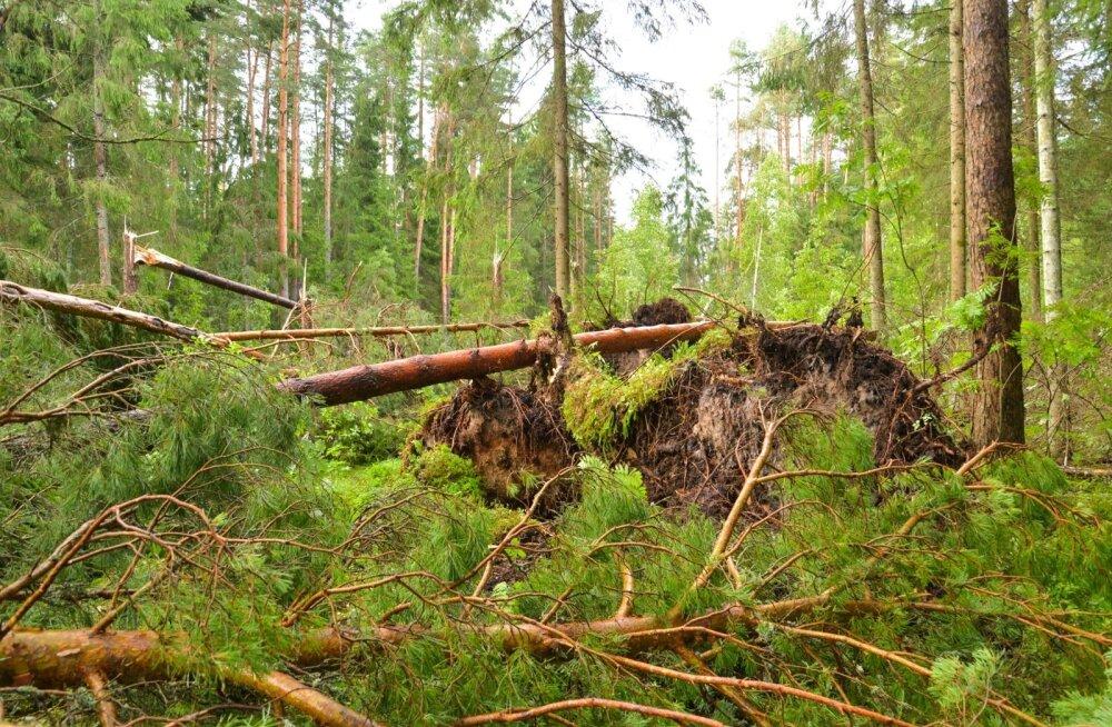 Tormi kahjud Viljandimaal Kootsi külas