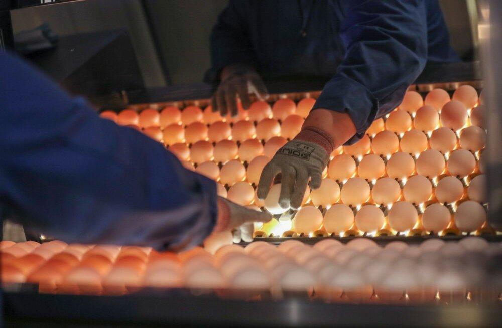 Защитники животных опубликовали шокирующее видео о яйцах Rimi, компания оценит ситуацию