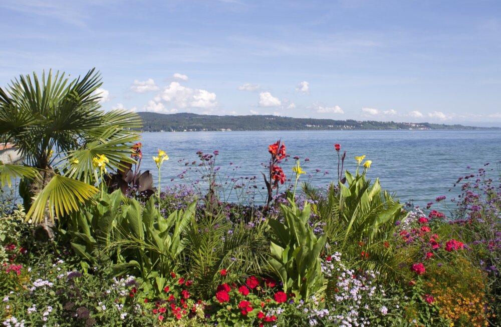 ФОТО: Остров цветов Майнау — цветущий рай на Боденском озере