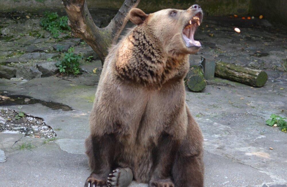 TOP 5 hirmutavad lood elust enesest: kõige karmimad loomade rünnakud inimeste vastu