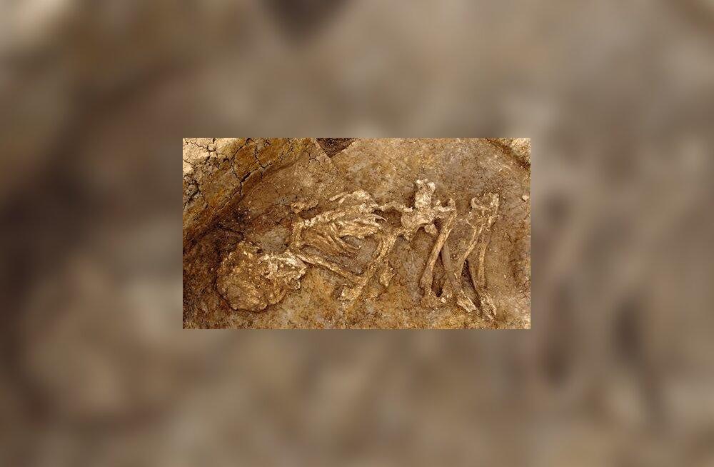 Teispoolsusse inglise moodi: pronksiaja britid olid agarad mumifitseerijad