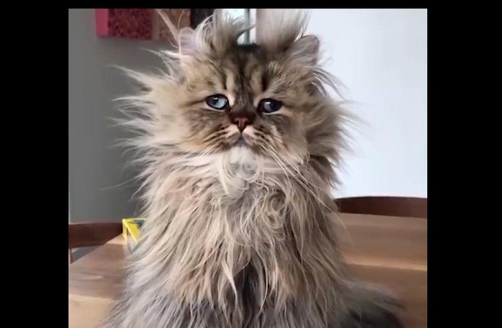 Fantastiline VIDEO | Milline näeb kassi arust sinu nädal välja?