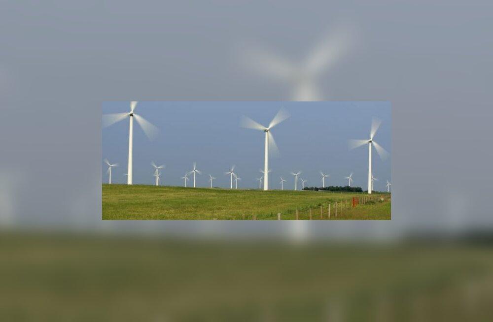 Sõnajalg: Tuuleenergia piiramine pärsib majandust