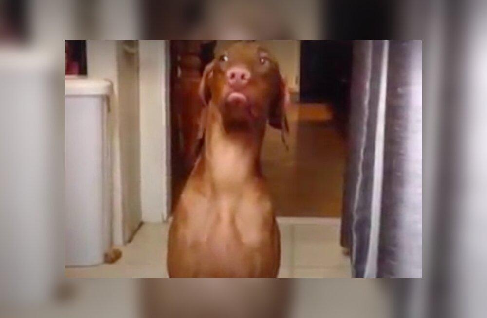 VIDEO | Uskumatud võrukaelad! Need koerad juba teavad, kuidas end süüst puhtaks pesta