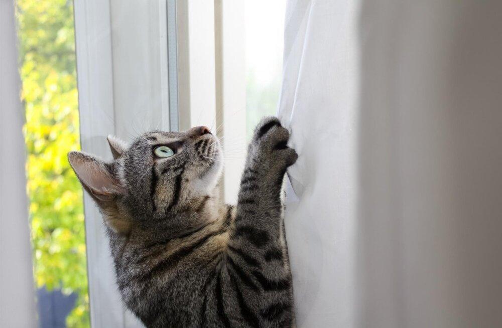 TÕESTATUD | Kas kassid siis ikkagi saavad oma nimest aru või ei?