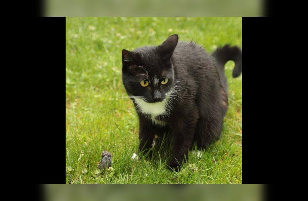 Kass Niki kadumine: müstilisel kombel kaduma läinud Niki leiti õnneliku juhuse läbi üles