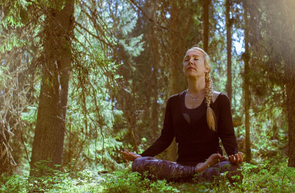 Прогулка как лечение: ТОП-5 мест Европы для лесной терапии