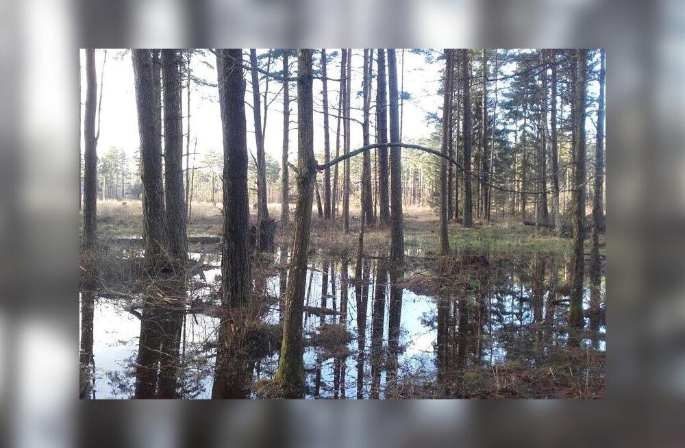 Läti märjad metsad