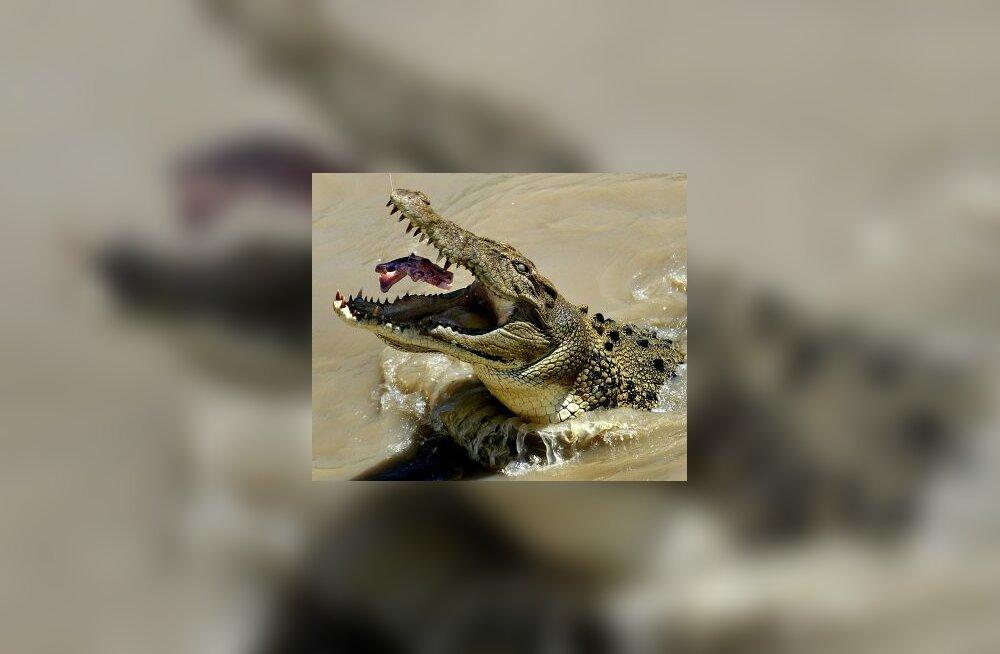 Krokodill