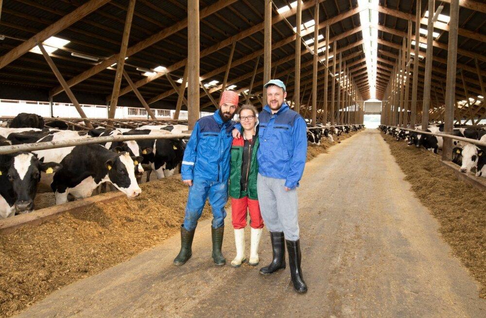 Дояров и доярок высылают из страны. Четверть эстонских коров будут не подоены, если из Эстонии уедут украинцы