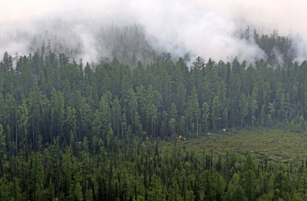 Медведев назвал возможной причиной лесных пожаров умышленные поджоги. Силовики проведут проверки