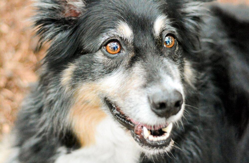 See, millist koera sa eelistad, räägib nii mõndagi sinu isikuomaduste kohta
