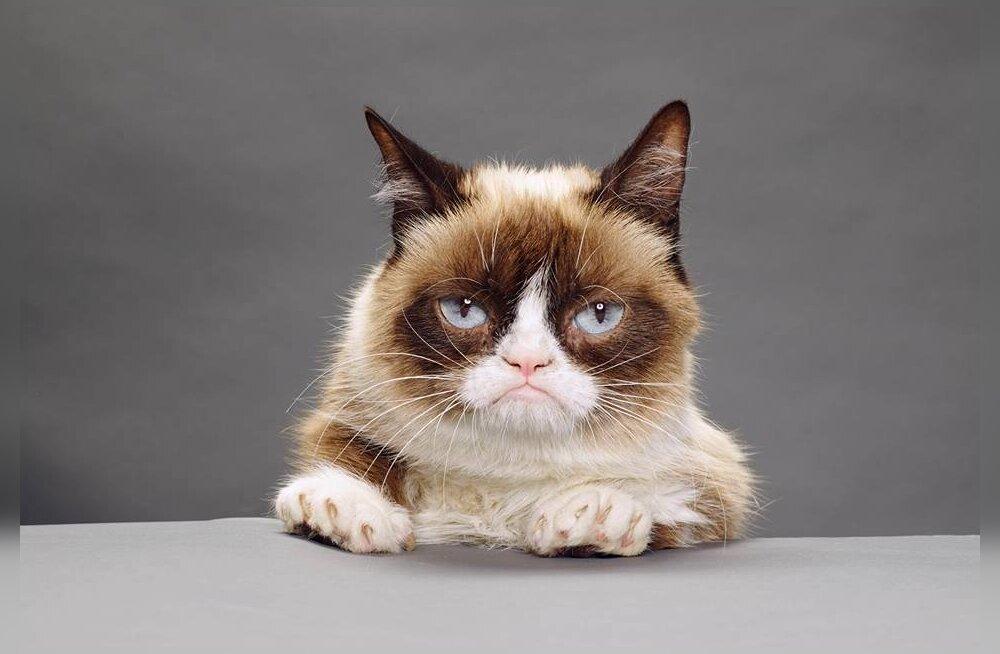 Grumpy Cat pole kuhugi kadunud ja teenis omanikele kohtus just ühe priske portsu raha