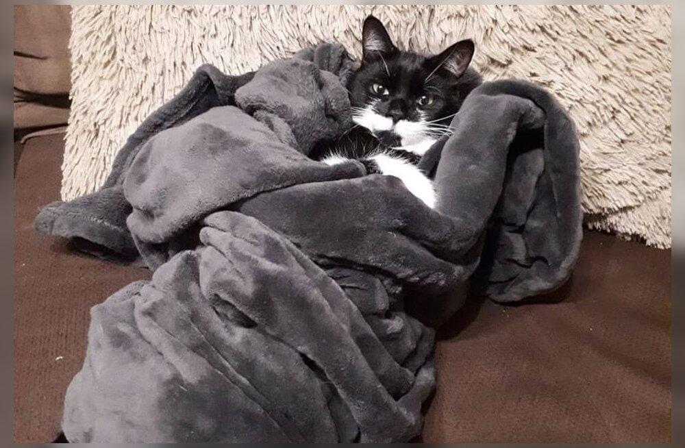Pesaleidja haiged kassid jäid rahahätta
