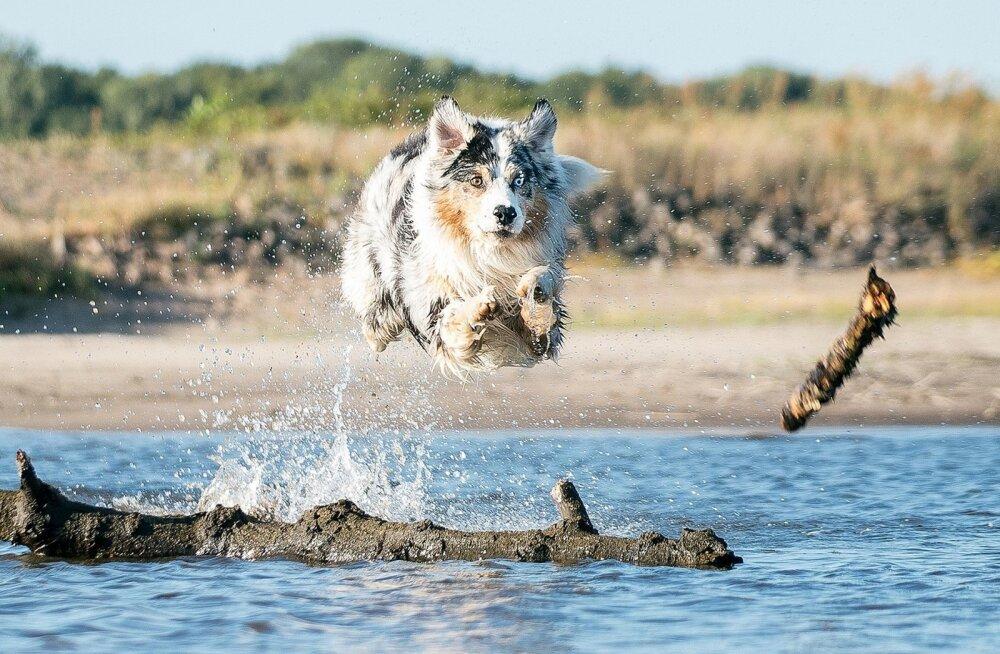 На пляж не со змеей, но собакой. Что должны знать владельцы