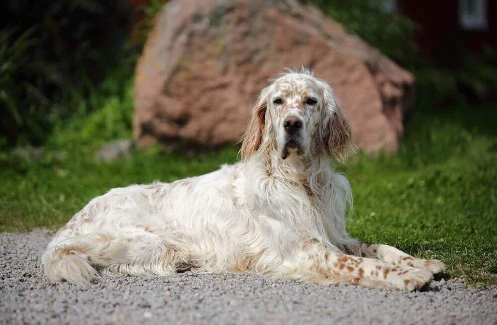 Помогите! Пропала собака ценной породы. Хозяева обещают вознаграждение