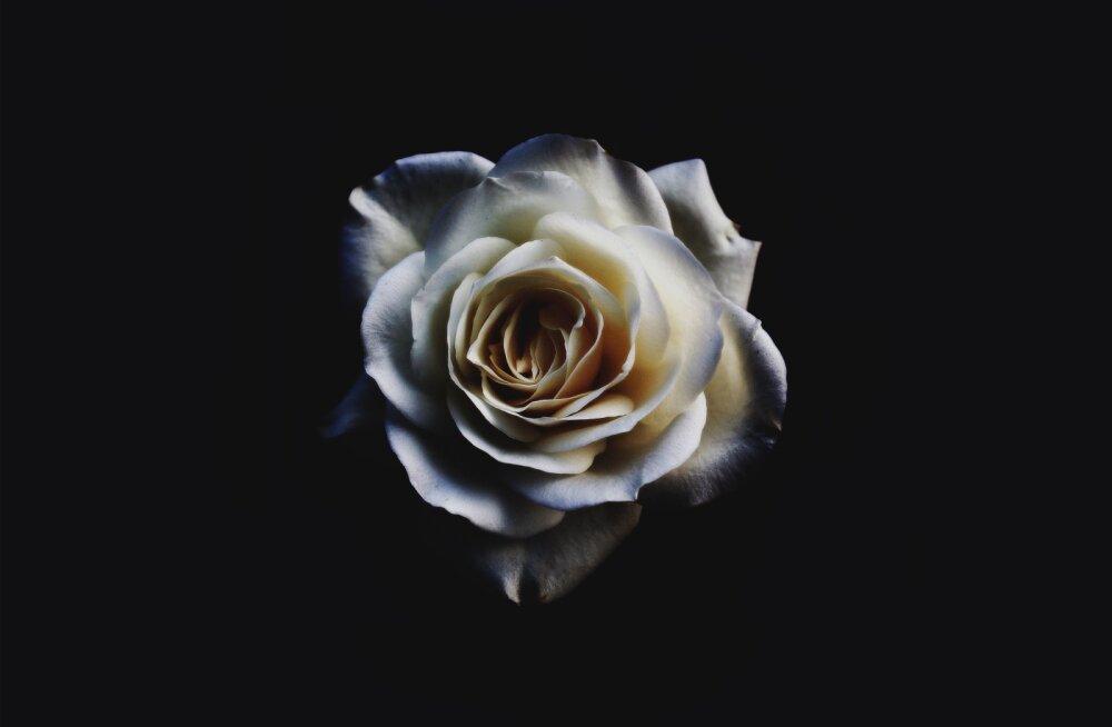 Valge roos on uus must kleit? Just sel põhjusel kannavad kõik Grammyde jagamisel rinnas seda kaunist õit