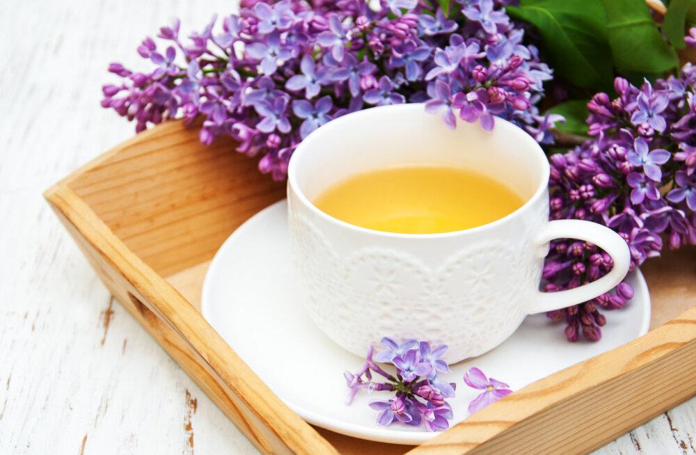 Kaunil ja lõhnaval sirelil on mitmekülgsed ravivad omadused