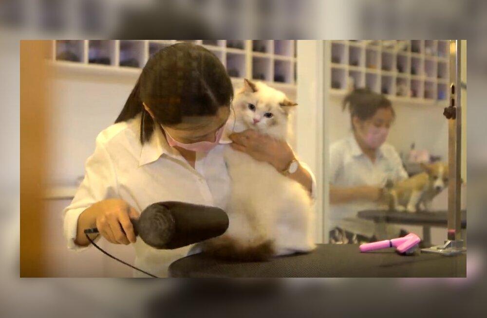Hiina lemmikloomatööstus.