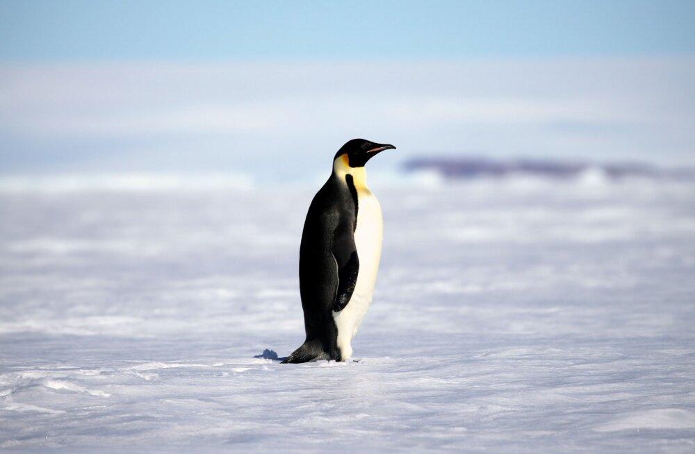 INTERAKTIIVNE GRAAFIK | Teadlased: maailmamere taseme tõus võib olla oodatust kõrgem
