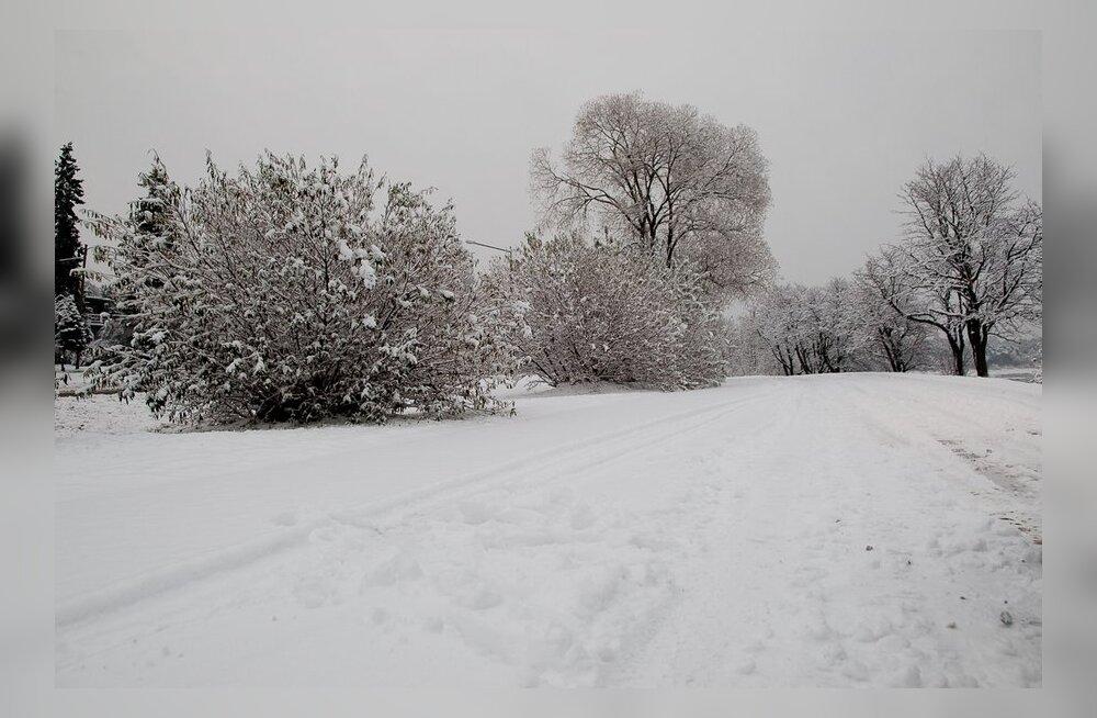 TV3: Kuuse-taat ennustab valgeid jõule, aastavahetuse tormi ja külma talve