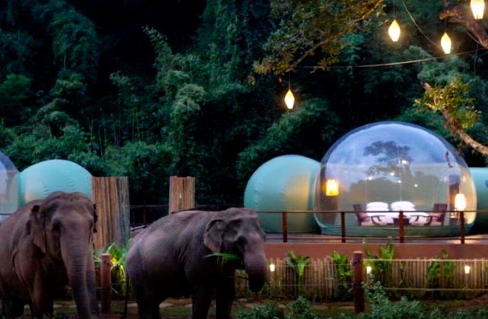 В джунглях Таиланда открылись прозрачные отели-пузыри