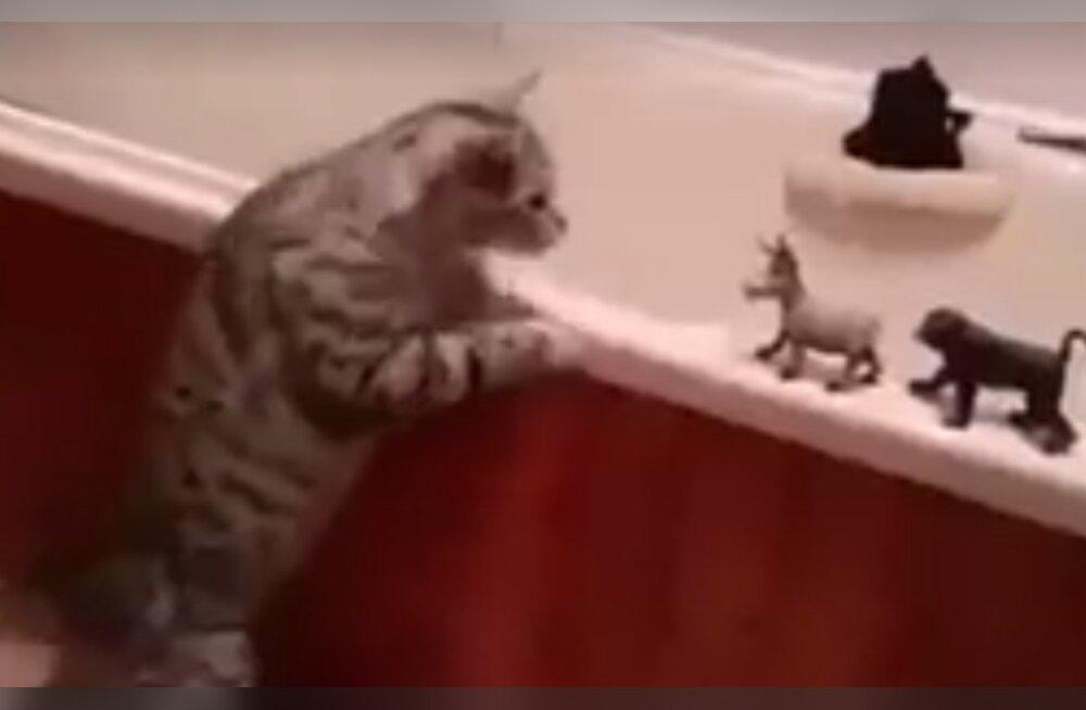 Humoorikas VIDEO: Kass, kes ei löö kartma ühegi vaenlase ees