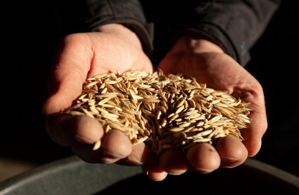 Mõistlikult taimekaitsevahendeid kasutava tavatootja vili vastab ka mahetootmise nõuetele.