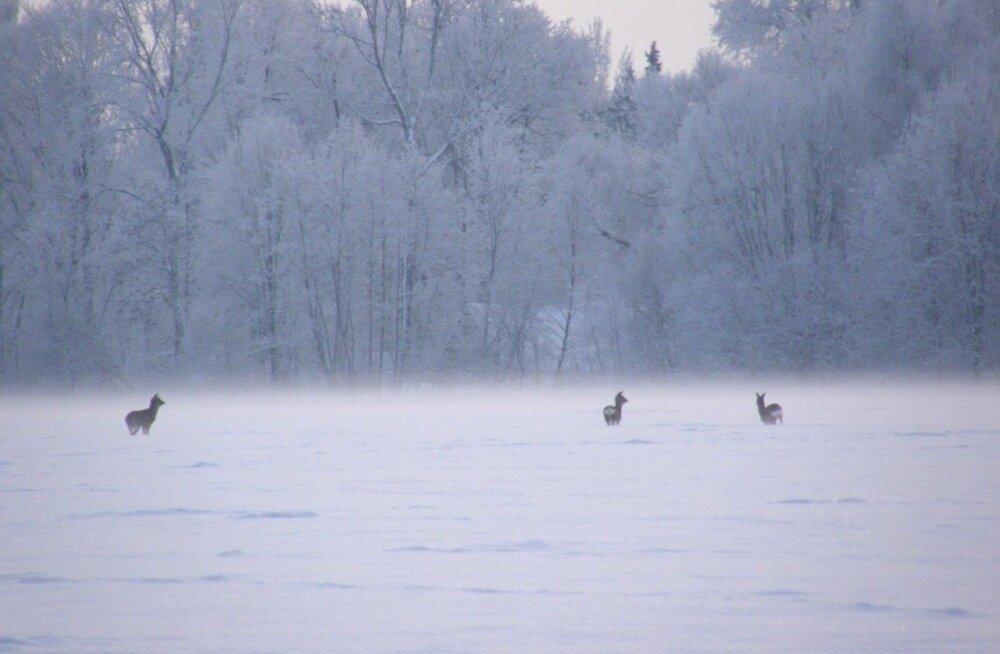 Leili metsalood | Metskitsed talvel