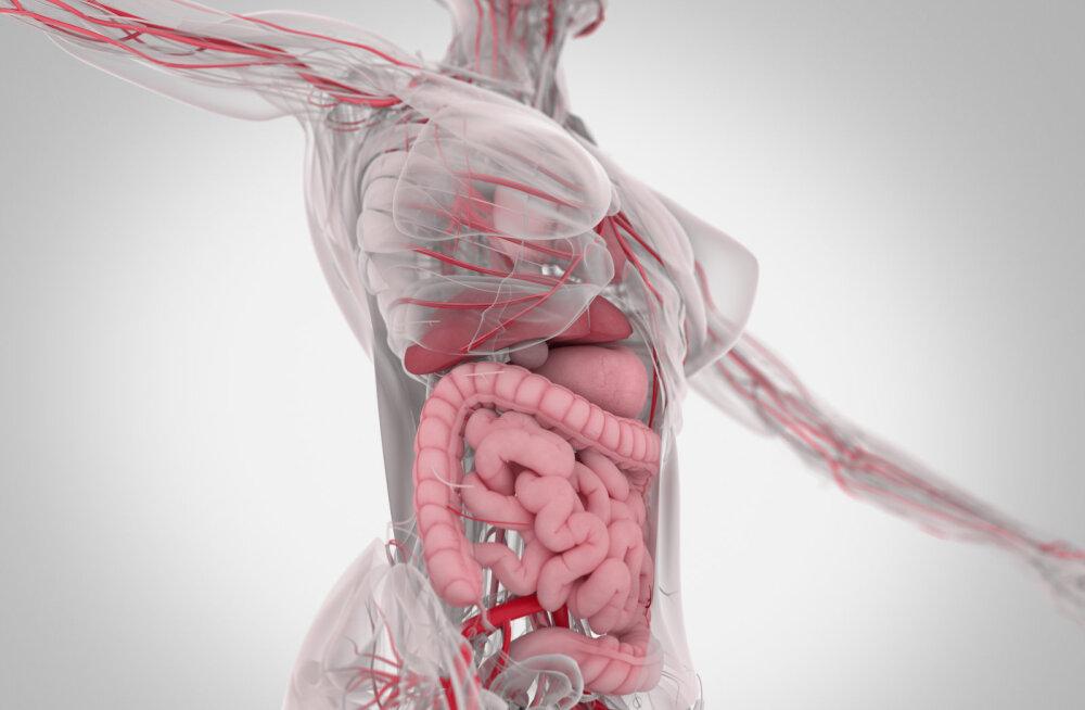 Soolestiku mikrofloora tasakaal on tervisele ääretult oluline! Mis juhtub, kui see on tasakaalust väljas ja kuidas selle tööd toetada?