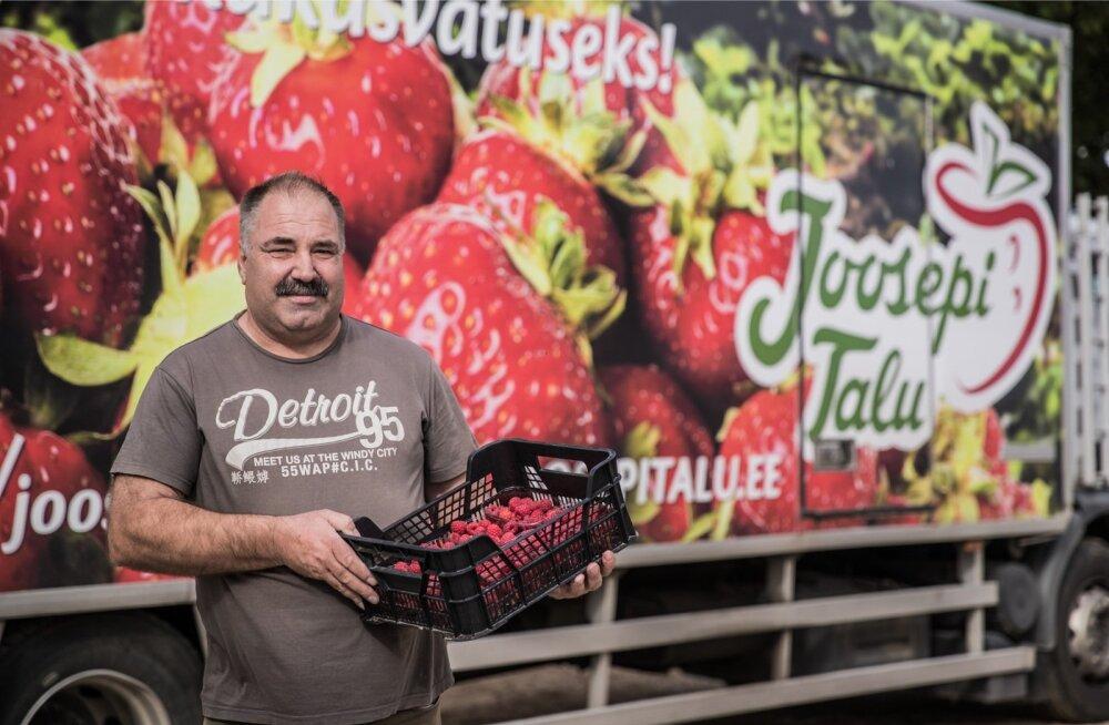 Joosepi talu peremees Hillar Lillo loobus palgatööst ja pühendus põllumajandusele üle 15 aasta tagasi. Ta ütleb, et talle see meeldib, kuigi kerge pole kunagi olnud.