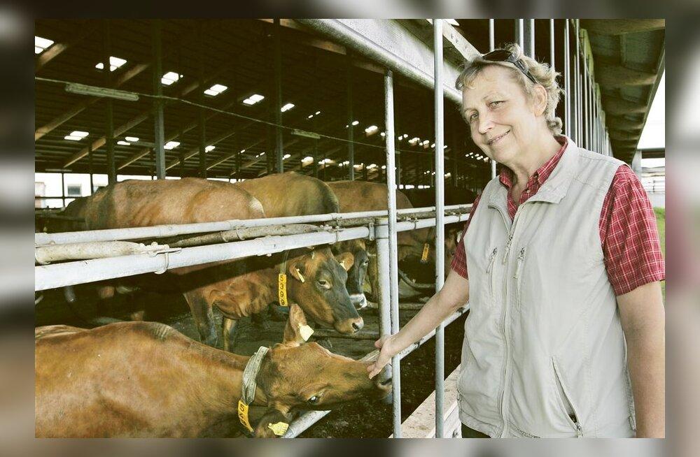 Avo Samarüütel ja Edda Vahtramäe: Kaks piimatootjat korraga ausäras