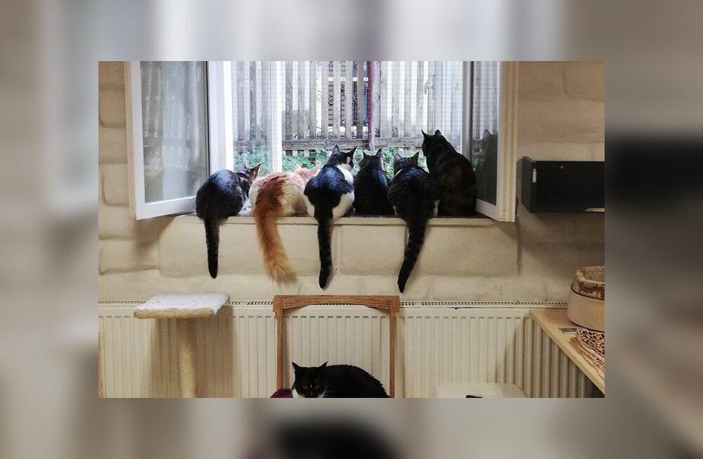 FOTO   Turvakodu kassid kogunevad igal hommikul ja õhtul tuvikvarteti etendust vaatama
