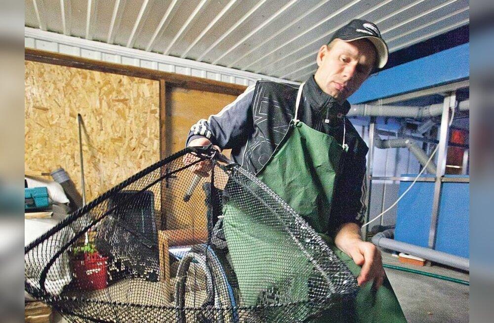 8d60193d457 Krossimees Avo Leok kasvatab Eestis haruldast angersäga - Maaleht