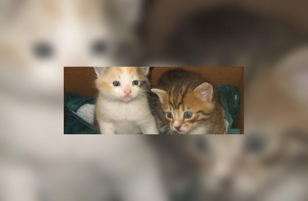 Неизвестный прошил шкурку котенка белыми нитками