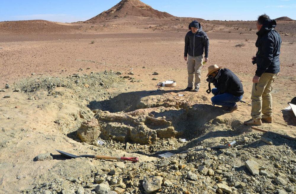 Suurima merekrokodilli kivistised leiti Tatooine'i kõrbest (mis asub siiski meie planeedil)