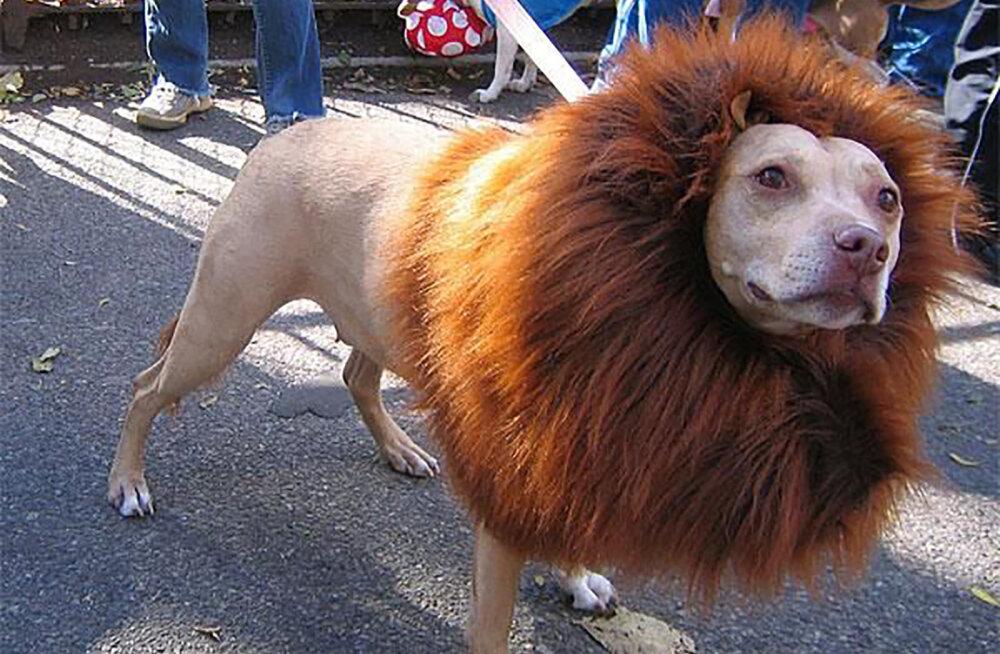 """Hullumeelne GALERII   Kõige pöörasemad """"soengud"""", mida lemmikloomad on pidanud taluma"""