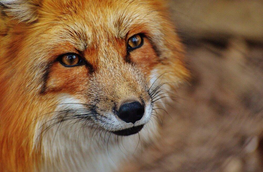 Tulekul on arvamusfestival: kas loomi saab päriselt aidata?