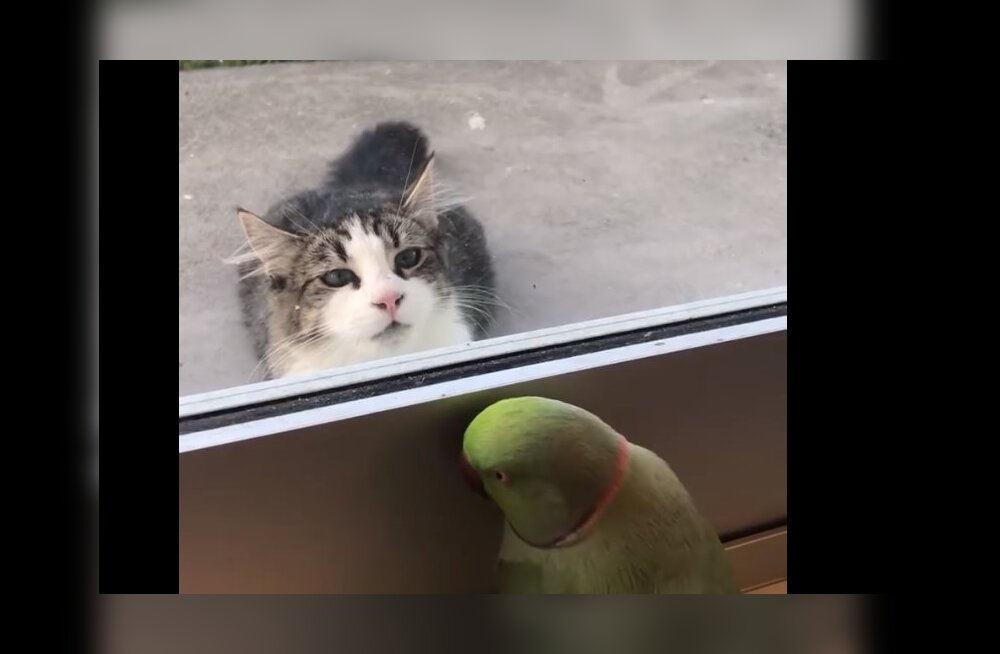 Humoorikas VIDEO | Üks ühel, teine teisel pool aknaklaasi - mõlemad mängivad peitust