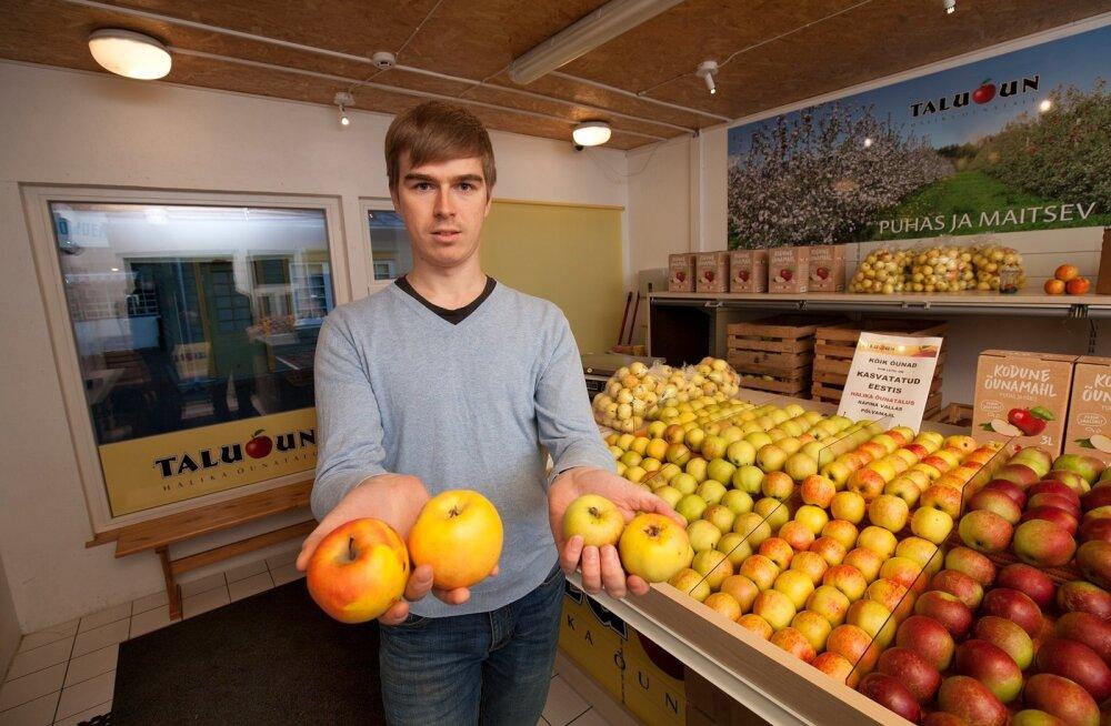 Halika õunatalu juhataja Lauri Kasvand