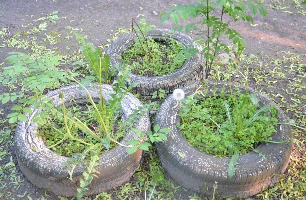 Ega aiamaad ainult kasu pärast pea pidama.