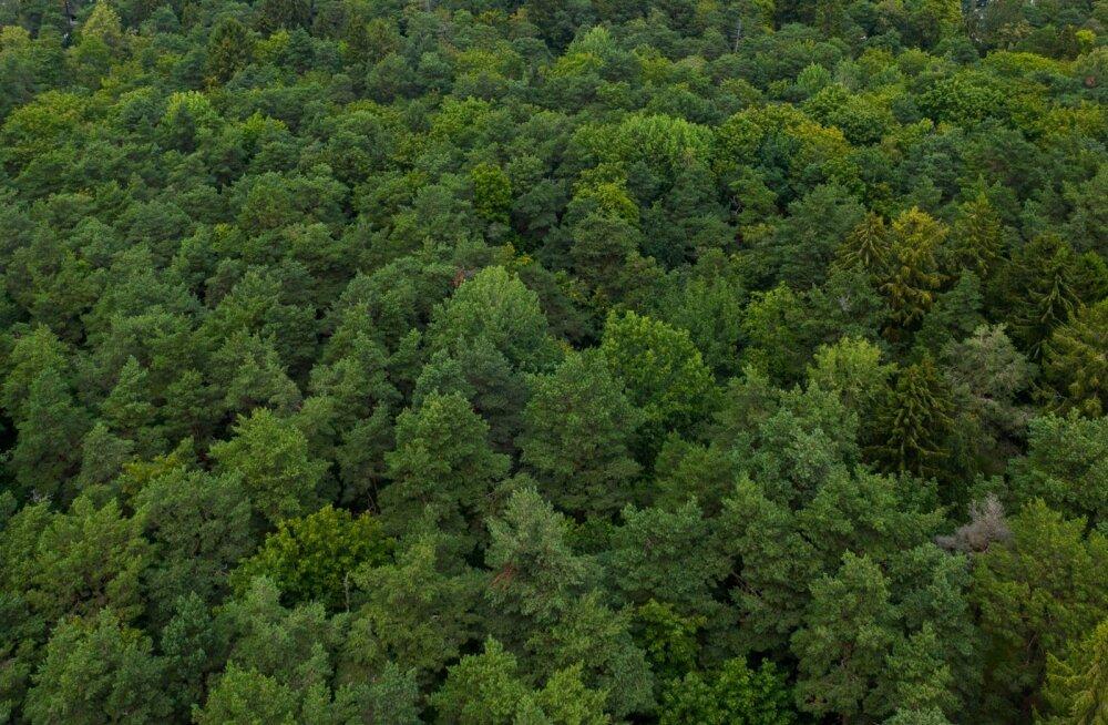Kui Amasoonias mets põleb, siis Euroopas kasvavad mühinal uued puud