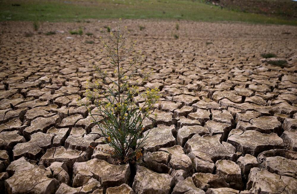 Тысячи ученых предупреждают о грозящем климатическом бедствии